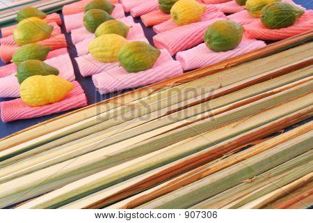 Citrons judíos & Palma Ceremonial fronda pantalla