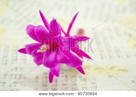 Gorgeous Pink Cactus  Flower On A Decoupage Board
