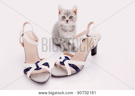 sandals. shoes on white background