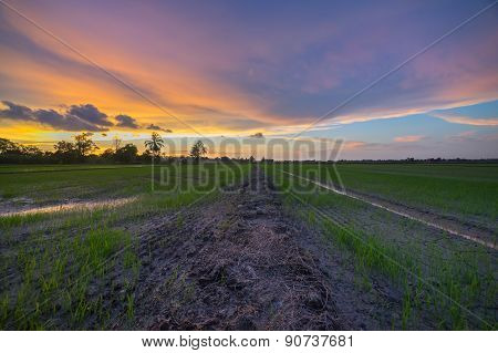 A Beautiful Sunset At Paddy Fields, Kedah Malaysia