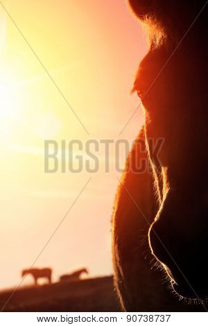 Horse Portrait With Warm Backlight