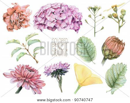 Set Of Different Spring Flowers And Plants