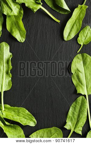 Fresh Sorrel Leaves On Black Background.