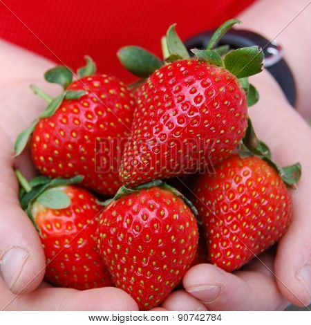 Juicy Ripe Strawberries in Child's Hands (Square)