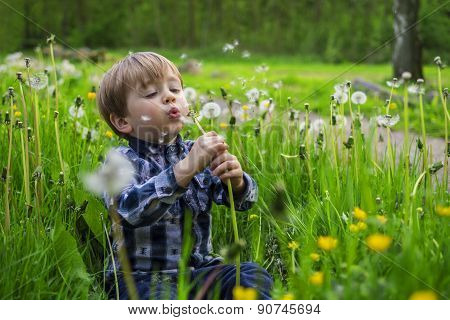 Little Kid With Dandelions