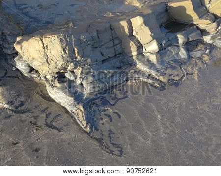 Snail Trail Within Beach Rock Pool