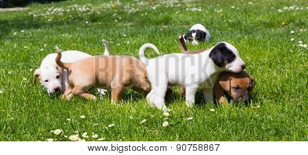 Mixed-breed cute little puppies on grass.