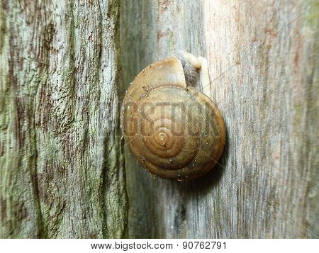 slug on wooden wall