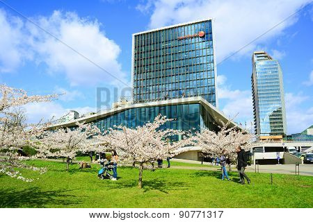 Spring In Vilnius City With Sakura Blossom