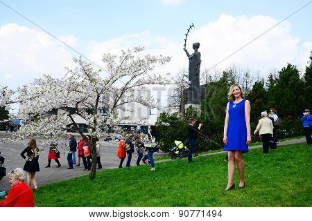 Spring In Vilnius City With Sakura Blossom