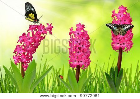 Hyacinth with dewy grass and butterflies