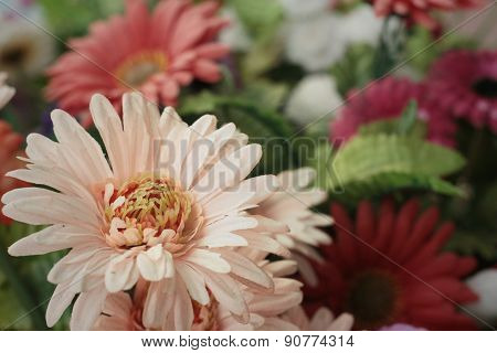 Gerbera In A Nature At The Park