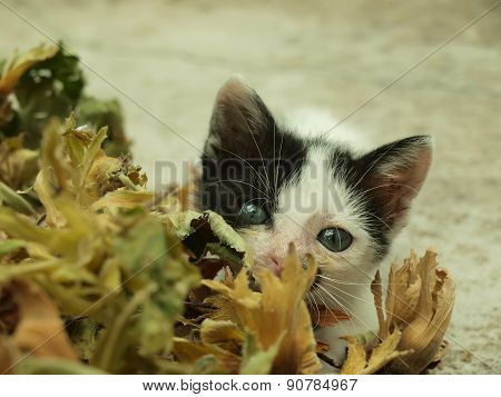 Adorable Kitten With Beautiful Eyes Playing Hide And Seek