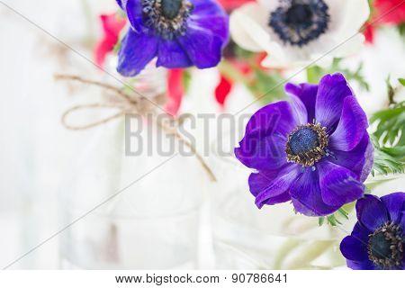 blue  anemone flowers