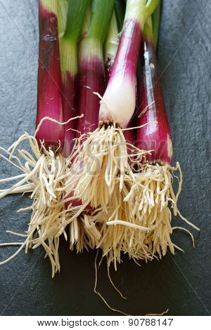 Close Up Of Red Scallions