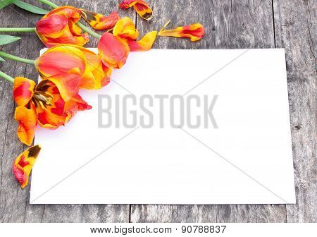 Faded Red And Yellow Tulips On The Oak Brown Table With White Sheet Of Paper