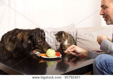Vegetarian Pets