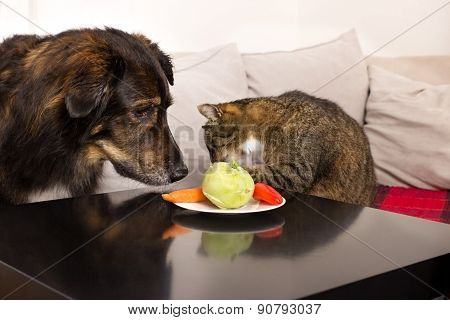Pets And Vegetables