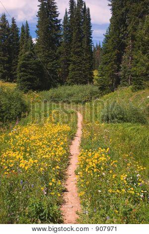 Gorgeous Mountain Trail