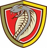 stock photo of cobra  - Illustration of a cobra viper snake serpent head with tongue out attacking set inside shield crest on isolated background done in cartoon style - JPG