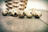 picture of quail egg  - a quail eggs in a retro style - JPG
