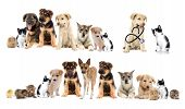 picture of laika  - a set pets on a white background - JPG