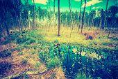 stock photo of wetland  - Vintage photo of wetlands at springtime - JPG
