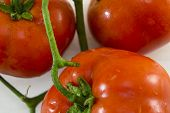 picture of plum tomato  - Bunch of recently washed tomatos close up - JPG