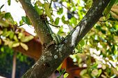 foto of tree snake  - venom green snake is eating lizards on tree