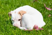 picture of little puppy  - Mixed - JPG