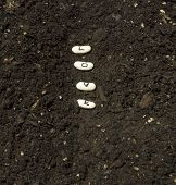 foto of rich soil  - Sowing seeds of love in a garden row with rich soil - JPG