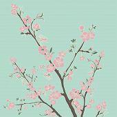 picture of moon-flower  - Flowering cherry branch - JPG