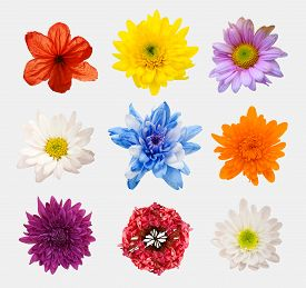 image of zinnias  - Big Selection of Various Flowers Isolated on White Background - JPG