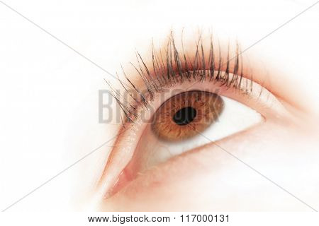 Brown eye of a young woman looking up. Close-up. Focus on iris and pupil.