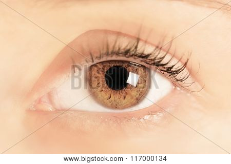 Brown eye of a young woman. Close-up. Focus on iris and pupil.