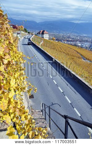 Road through the vineyards in Lavaux region, Switzerland