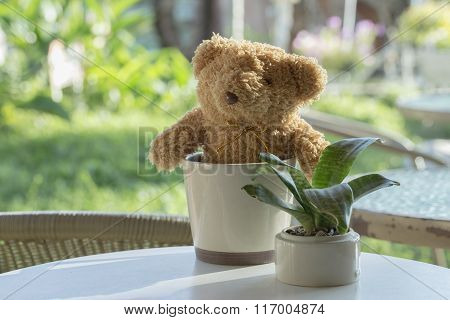 Soft Focus On Bear Doll. Bear Doll And Plant Pot Setting On Table.