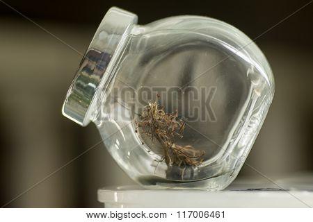 Fiber sample in glass jar