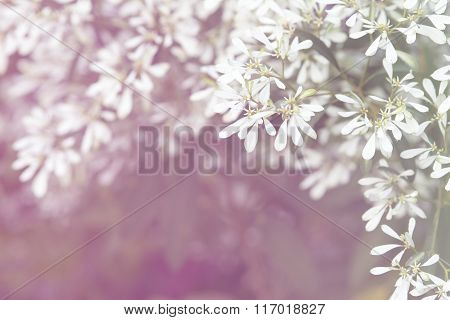 Abstract natural text box Pascuita flower backgrounds