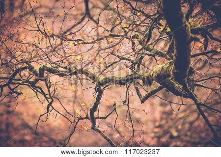 Tree Branches Or Twigs In Autumn