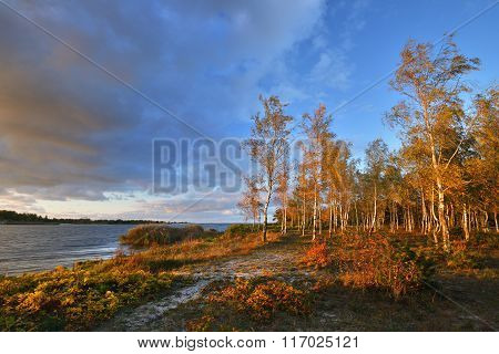 Autumn Landscape with yellow trees against blue sky