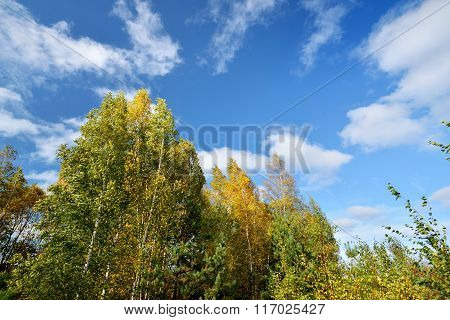 Autumn landscape. Trees against clear blue sky