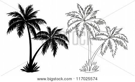 Palm Trees, Silhouettes and Contours