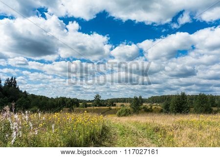 Meadow With Yellow Wildflowers And Country Road
