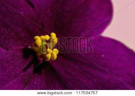 Dark Purple Flower Violet