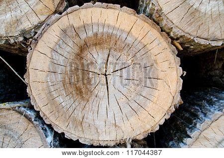 Cut log end