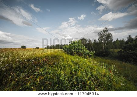 Wild herbs on the summer meadow