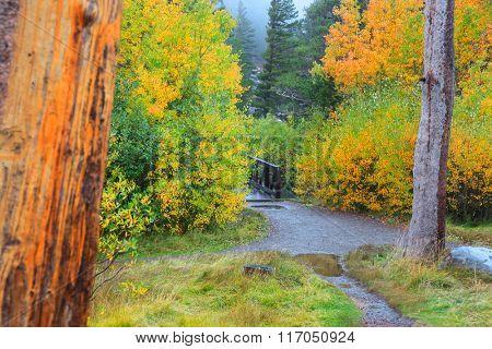 Autumn in Sierra Nevada mountains near Mammoth lakes
