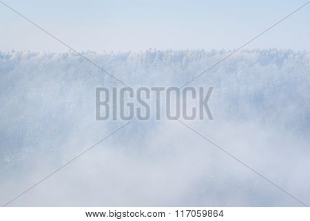 Frosty Fog Over A Panorama Of A Winter Wonderland Pine Tree Forest