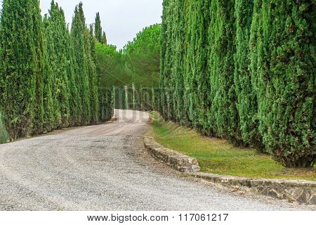 Cypress Trees rows and a white road rural landscape in Montalcino land near Siena, Tuscany, Italy, Europe.